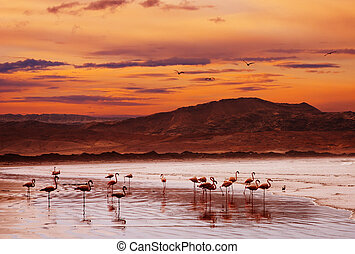 Flamingo on the beach at sunset