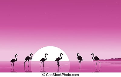 Flamingo on the lake scenery silhouettes