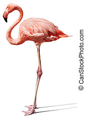 pink flamingo on white