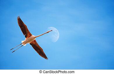 Flamingo over blue sky
