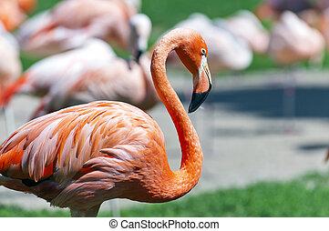 Flamingo - An orange flamingo standing on a bank