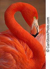 flamingo portrait - Vertical portrait of a greater flamingo