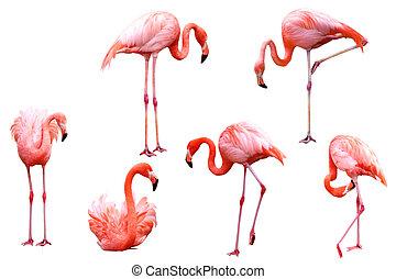 Flamingo Set - Set of red flamingo birds isolated on white...