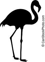 Flamingo, shade picture