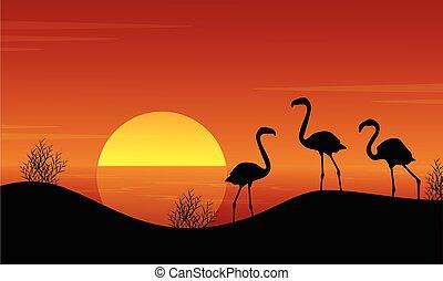 flamingo, sonnenuntergang, see, landschaftsbild