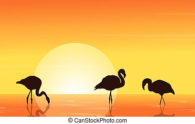 flamingo, sonnenuntergang, szene, see