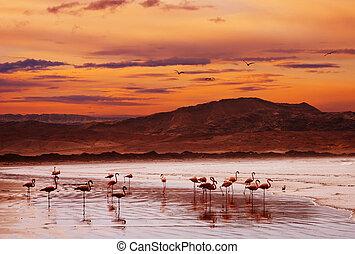 flamingo, strand, an, sonnenuntergang