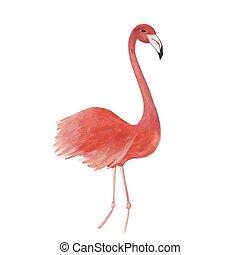 Flamingo watercolor isolated bird vector trace illustration