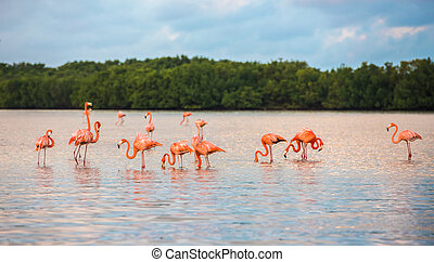 Flamingoes at Rio Lagartos Biosphere Reserve, Yucatan,...