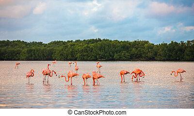 Flamingoes at Rio Lagartos Biosphere Reserve, Yucatan,...