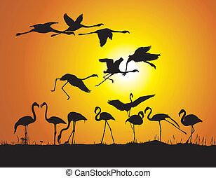 Flamingos and sunset