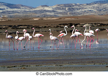 Flamingos at a lake