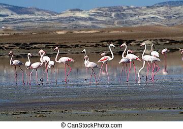 Flamingos at a lake