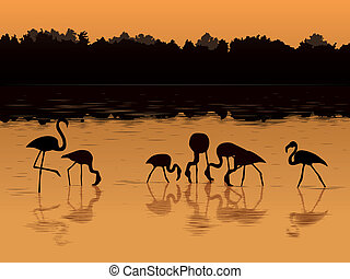 Flamingos at sunset in the river.