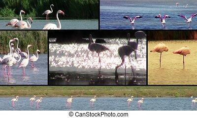 Flamingos, collage - Wonderful flamingos montage