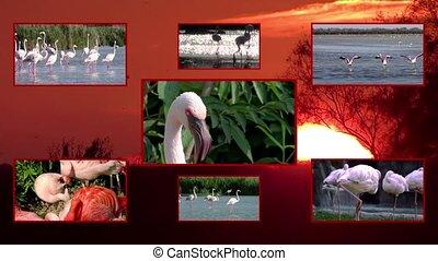 flamingos collage, texture