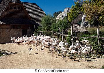 flamingo's, dierentuin