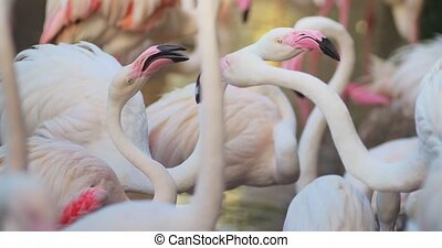 flamingos flirting