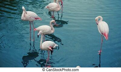 Flamingos Flock In The Lake