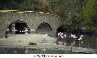 Flamingos Flock In the zoo