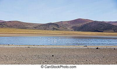 Flamingos in the lagoon Huayñacota in the Natural Park of Sajama. Bolivia-