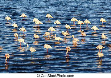 Flamingos In The Lake