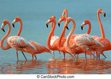 Flamingos are walking in the Yucatan.