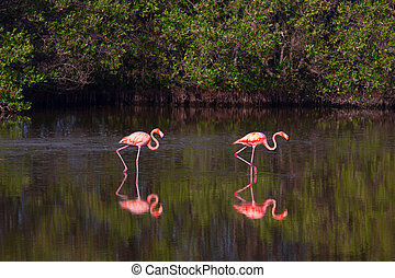 Flamingos in water in Cuba