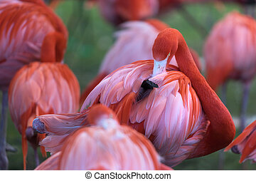 flamingos on a meadow