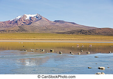 Flamingos on lake Huayñacota with the snowcapped volcano Anallajchi the background. Bolivia.
