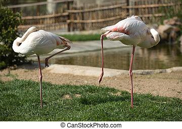 Flamingos on the grass