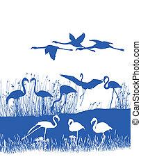 Flamingos on the shore