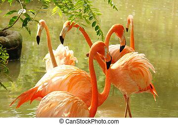 Orange flamingos on lake background. Animal image