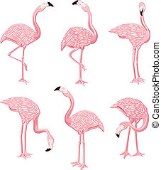 Image representing a six flamingos pink, isolated on white, vector design.