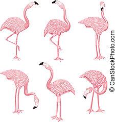 Flamingos Pink - Image representing a six flamingos pink, ...
