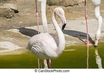 Flamingos resting on the shore of a pond