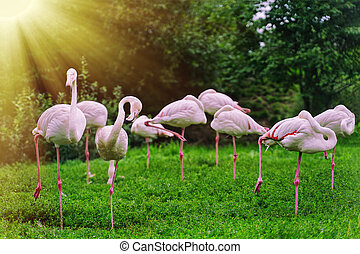 flamingos stand on one leg grazing on a meadow in nature reserves