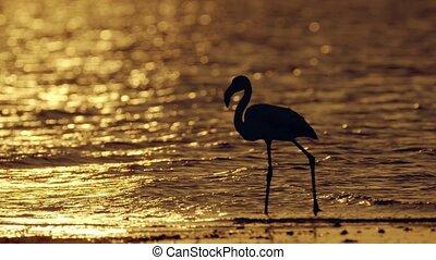 Flamingos wade in Salt Water Lake of Larnaca Cyprus at sunset 4K
