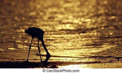 Flamingos wade in Salt Water Lake of Larnaca Cyprus at...
