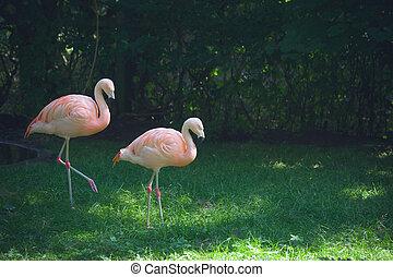 Flamingos walking on green grass