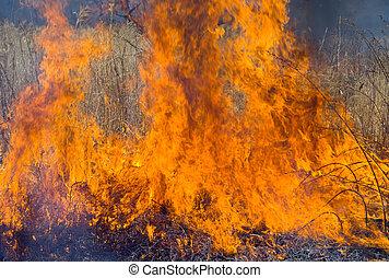 flamme, de, brushfire, 6