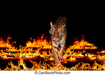 flammes, tigre, ardent