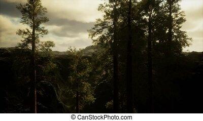 flanc montagne, arbres, accidenté, orage, brouillard, venir...