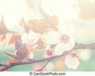 flare., obscurecido, pomar, páscoa, cena, primavera, ou, abstratos, borda, bonito, blossom., fundo, ensolarado, day., flowers., árvore, sol, experiência., cor-de-rosa, natureza, springtime, arte, florescer