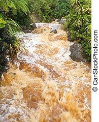 Flash flood in West Coast creek, NZ South Island