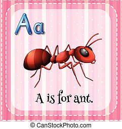 Flashcard A is for ant