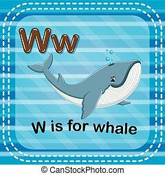 flashcard, baleia, w, letra