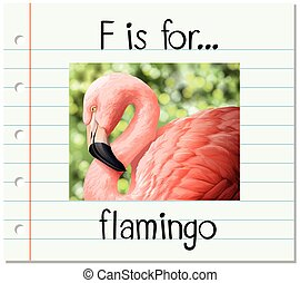 flashcard, flamingo, brief f