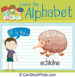 Flashcard letter E is for echidna illustration