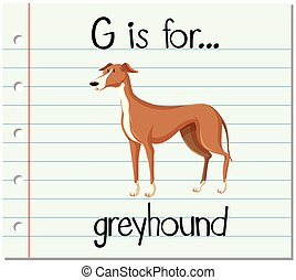 Flashcard letter G is for greyhound